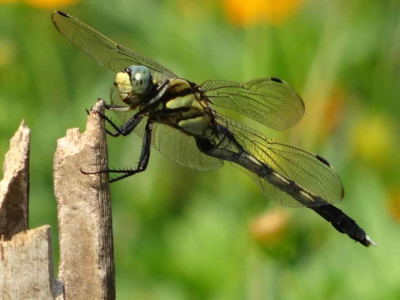 Dragonfly Nature EyeEm Nature Lover Nature_collection