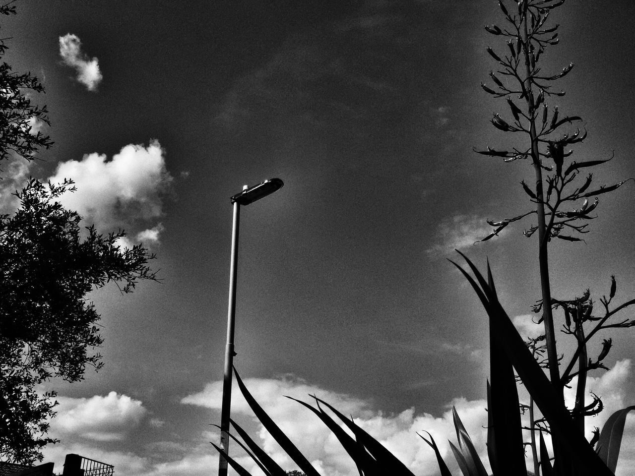 sky, low angle view, cloud - sky, silhouette, tree, no people, outdoors, nature, day, flower, close-up