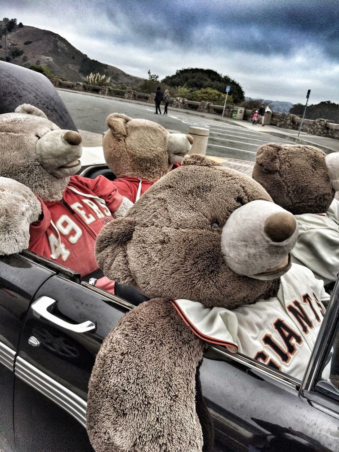 Sfgiants Sf49ers Bears In A Convertible Teddybear