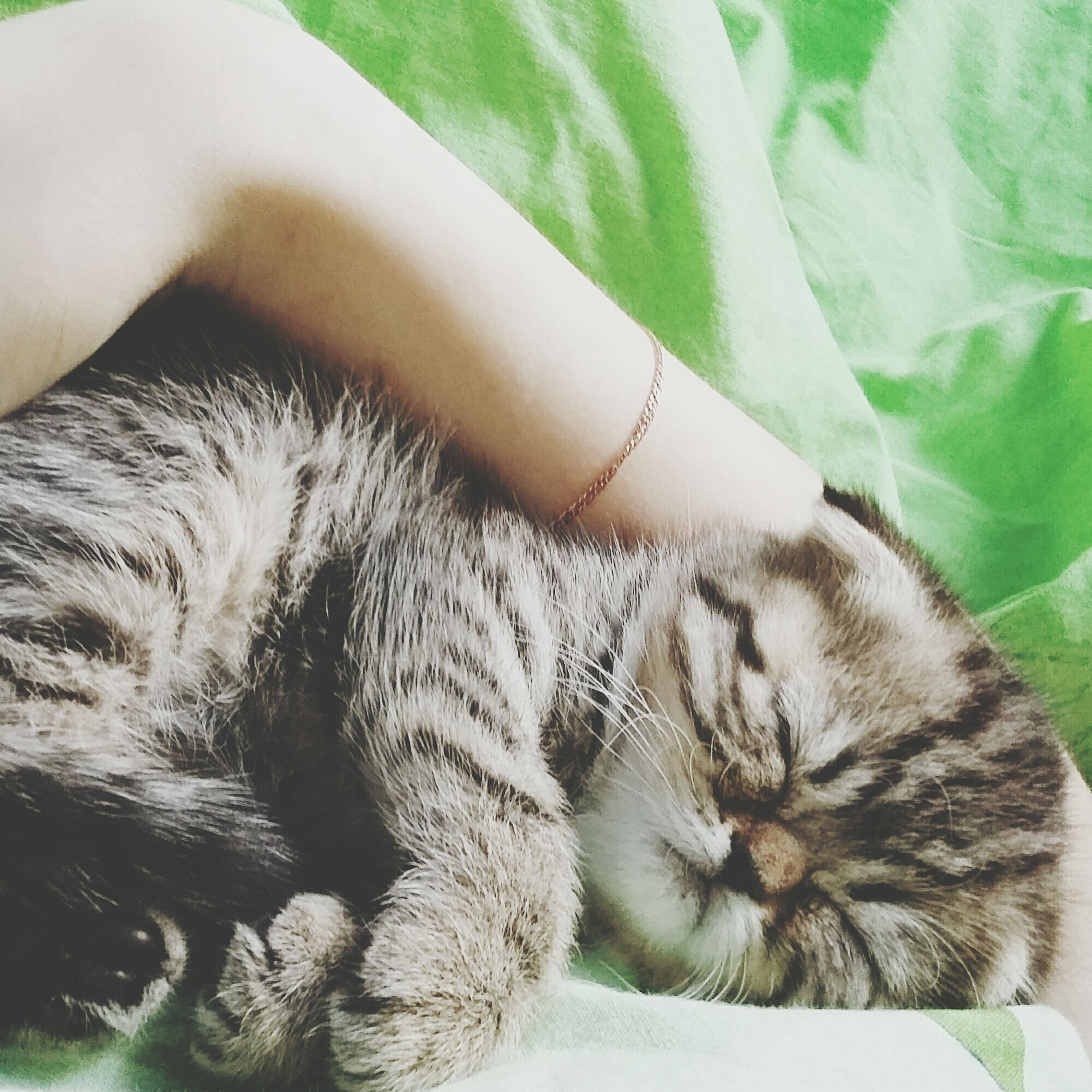 pets, domestic cat, animal themes, domestic animals, mammal, one animal, cat, feline, relaxation, indoors, sleeping, lying down, resting, whisker, close-up, eyes closed, part of, bed, animal head, young animal