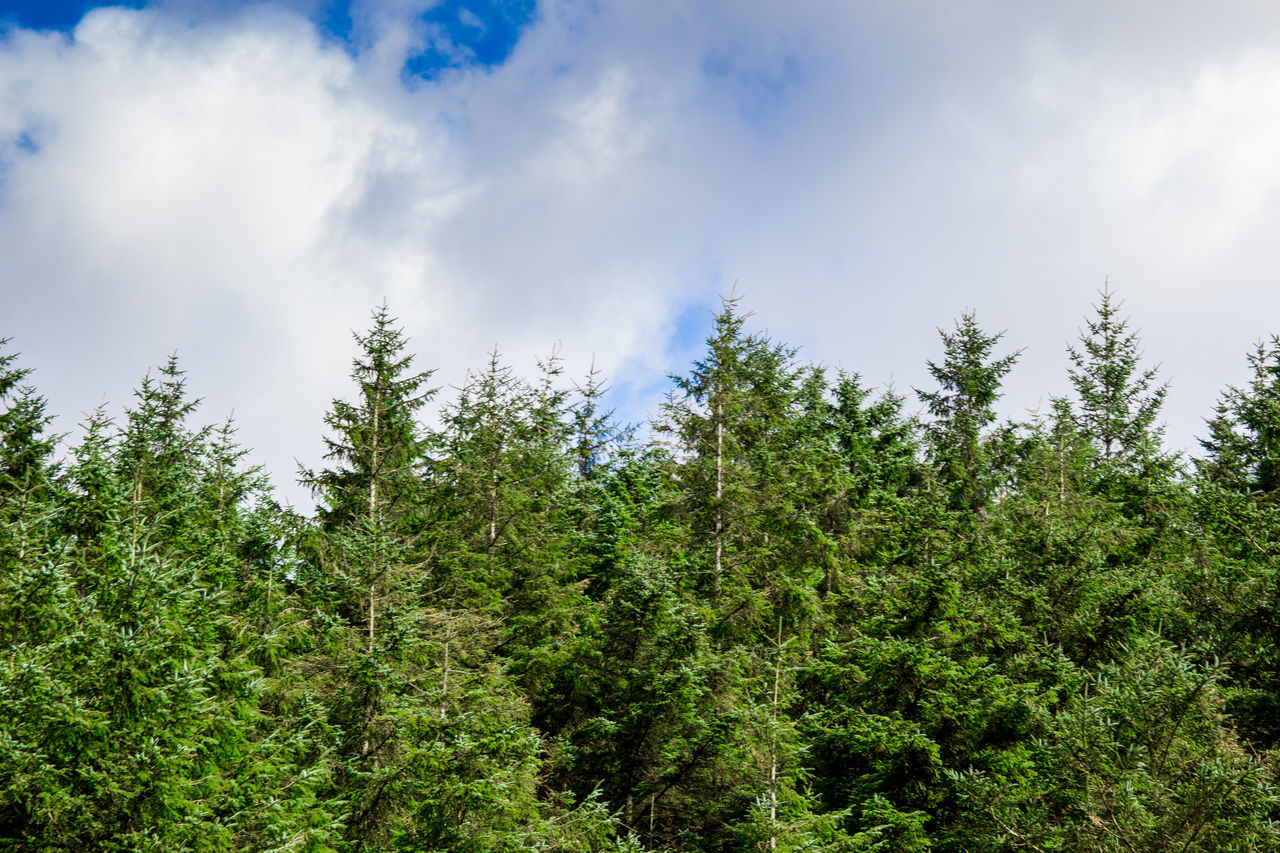 tree, nature, growth, forest, day, no people, sky, tranquility, cloud - sky, green color, beauty in nature, outdoors, scenics