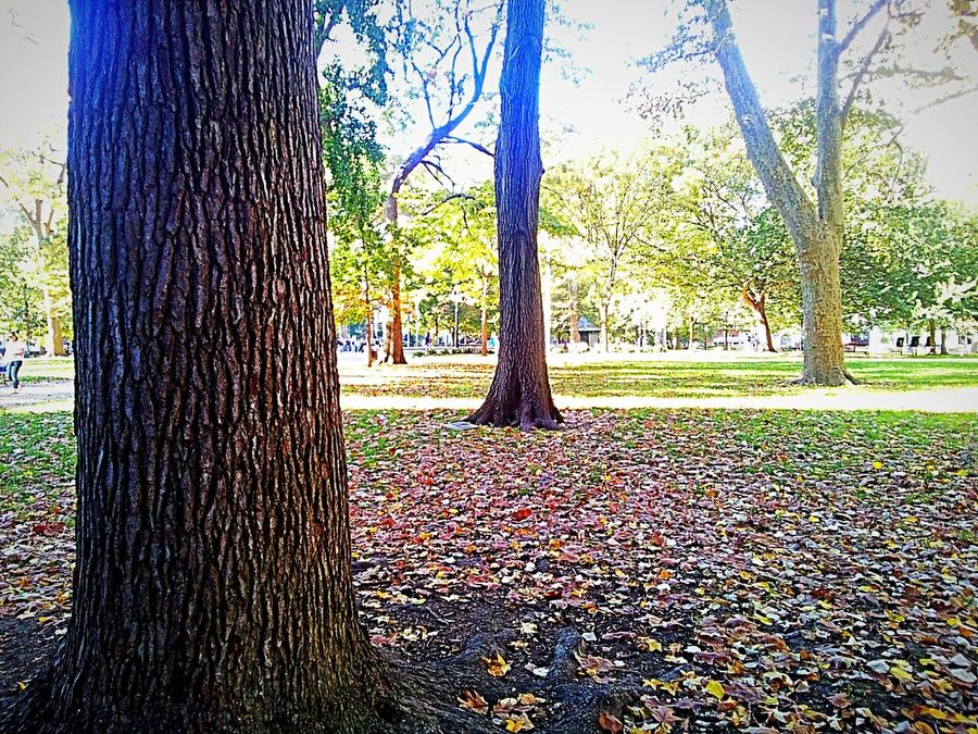 Tree Growth Nature Tree Trunk No People Outdoors Beauty In Nature Tranquility Scenics