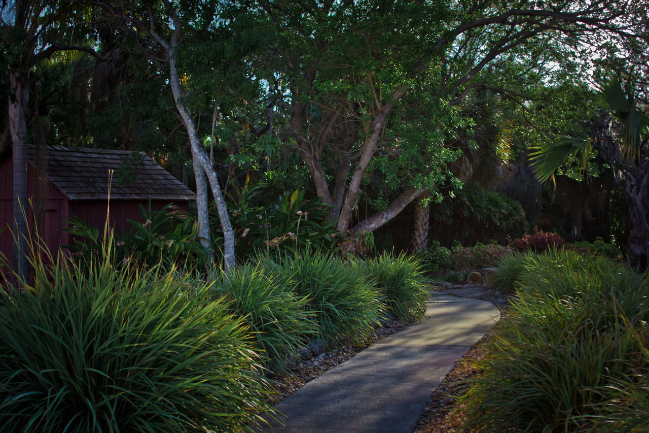 Garden path FIT Botanical Garden Florida Institute Of Technology Florida Nature Garden Path Garden Pathway Morning Sun Palm Trees Peaceful Shady Lane Tranquility Lush Foliage Verdant