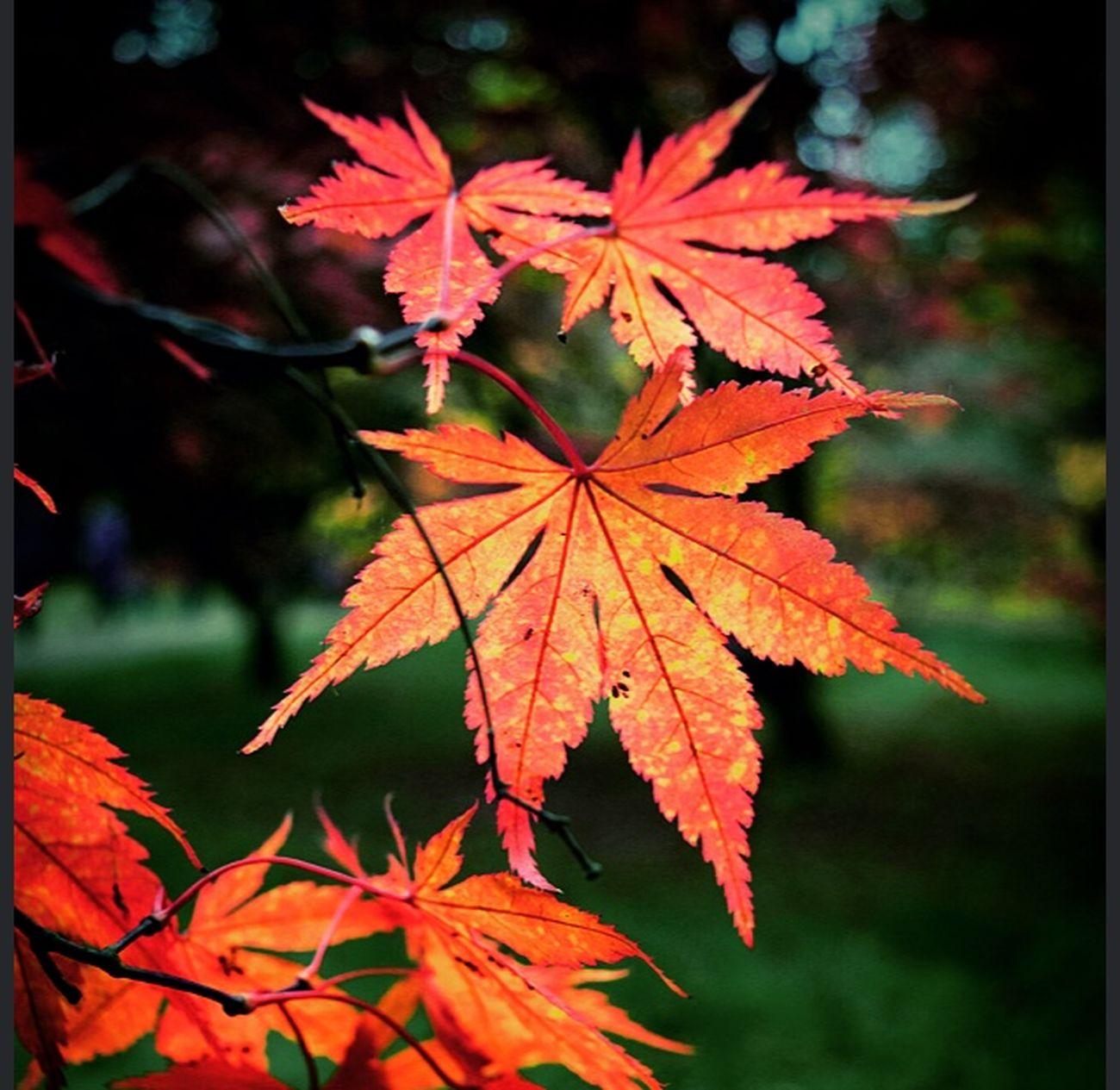 Arboretum Westonbirt Arboretum Autumn Colors Autumn Autumn Leaves
