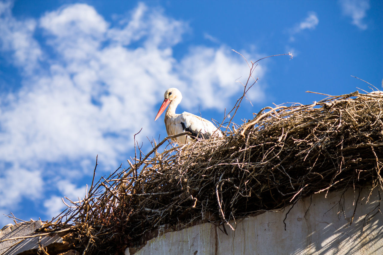 Algarve Animal Themes Animal Wildlife Animales Animals Animals In The Wild Beauty In Nature Bird Bird Nest Cegonha Cigueña Cigüeñas Cloud - Sky Low Angle View Nest Nido Ninho No People One Animal Portugal Silves Storch Stork Tiere White Stork