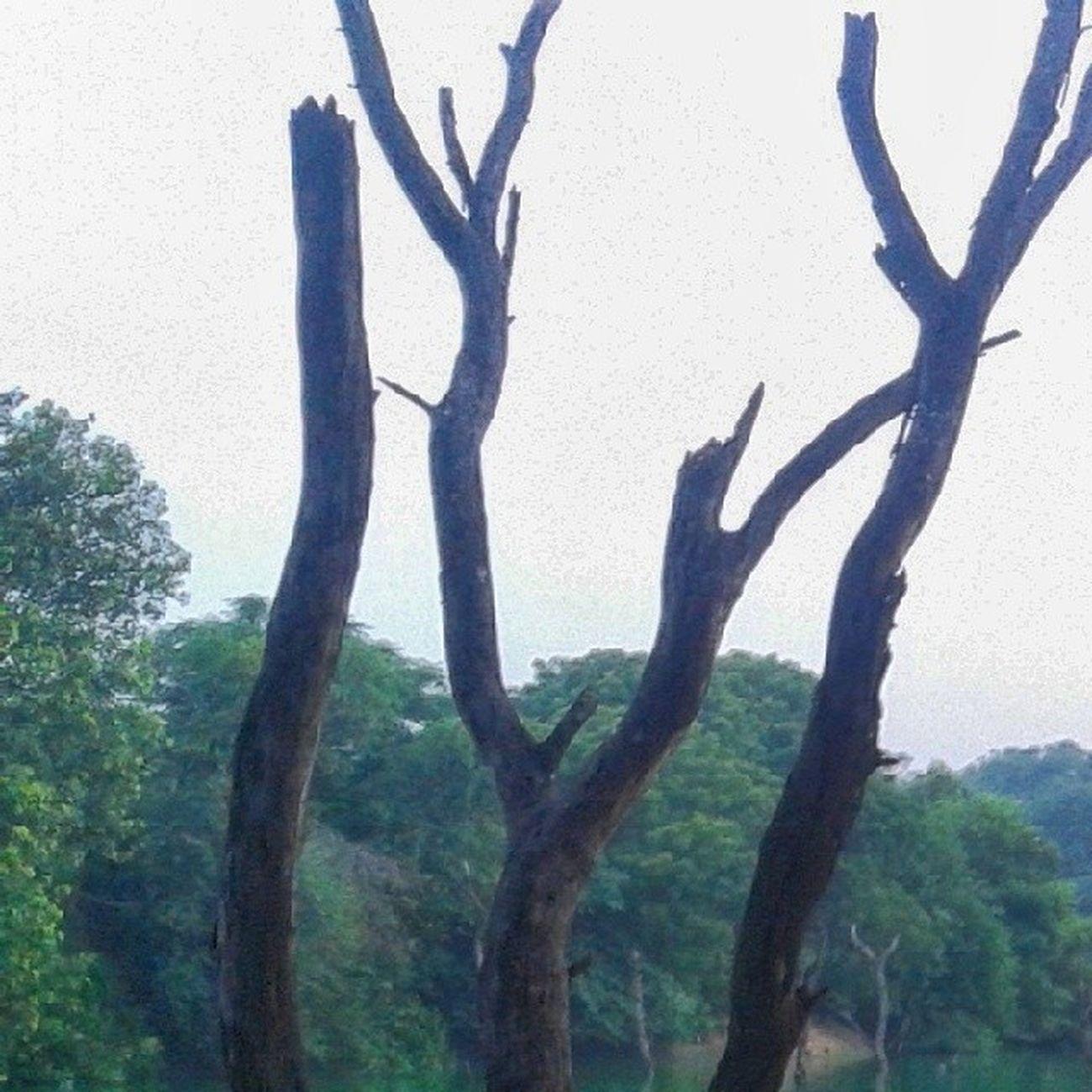 Hauzkhasvillage Newdelhi Delhi Set of 6 pics, please see the gallery