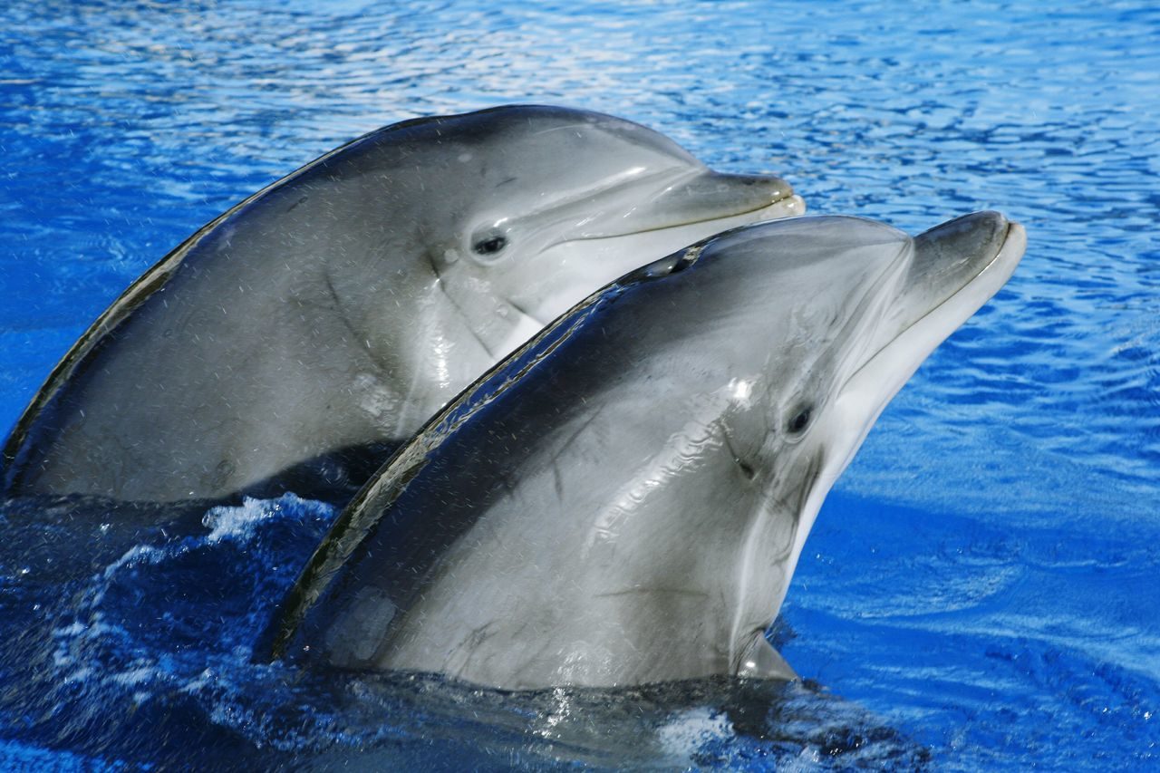 Beautiful stock photos of dolphins, , Animal Themes, Blue, Day