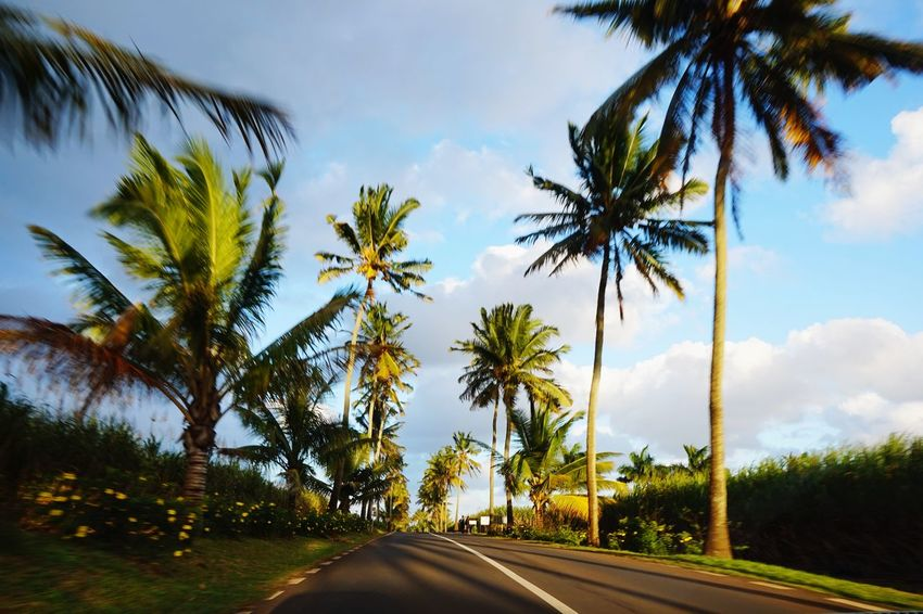 Mauritius Nature Palm Tree Tree Cloud - Sky Road Travel Sky Journey Travel Destinations Outdoors Vacations Scenics Beauty In Nature