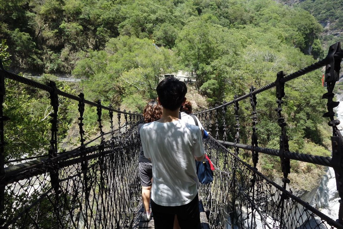 Rear View Real People Tree Nature Standing Railing Lifestyles Day One Person Outdoors Taroko National Park Taiwan Long Goodbye