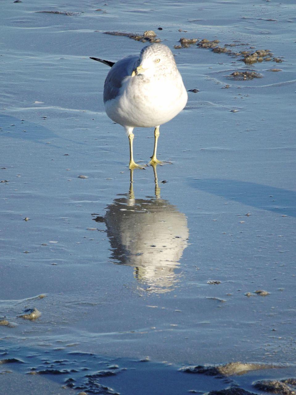 Bird Perching On Shore At Beach