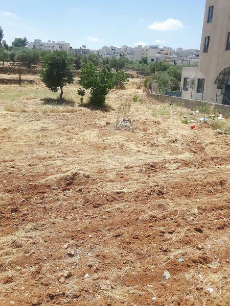 Palestine Near East Field Acre Bethlehem West Bank