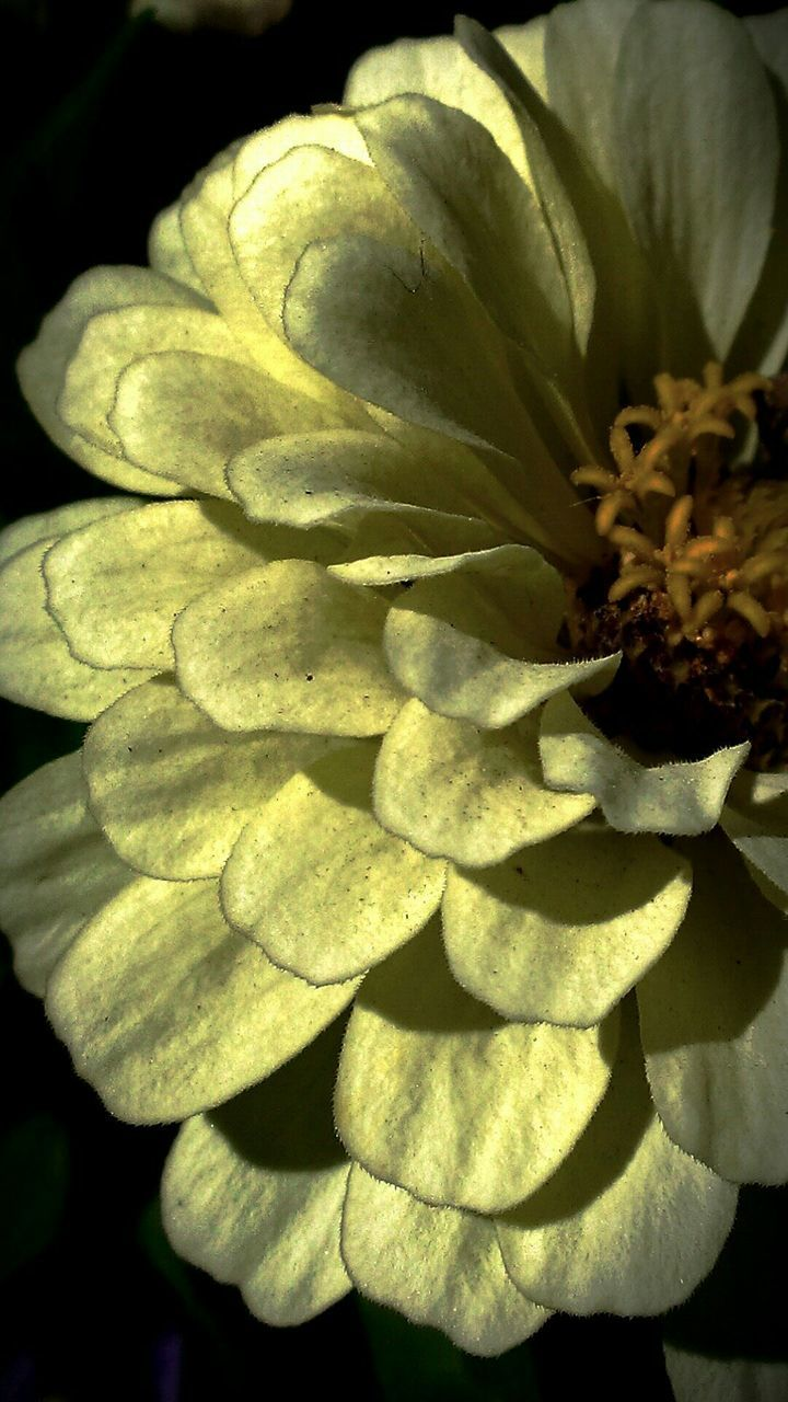 flower, growth, nature, no people, plant, petal, close-up, outdoors, beauty in nature, day, flower head, freshness