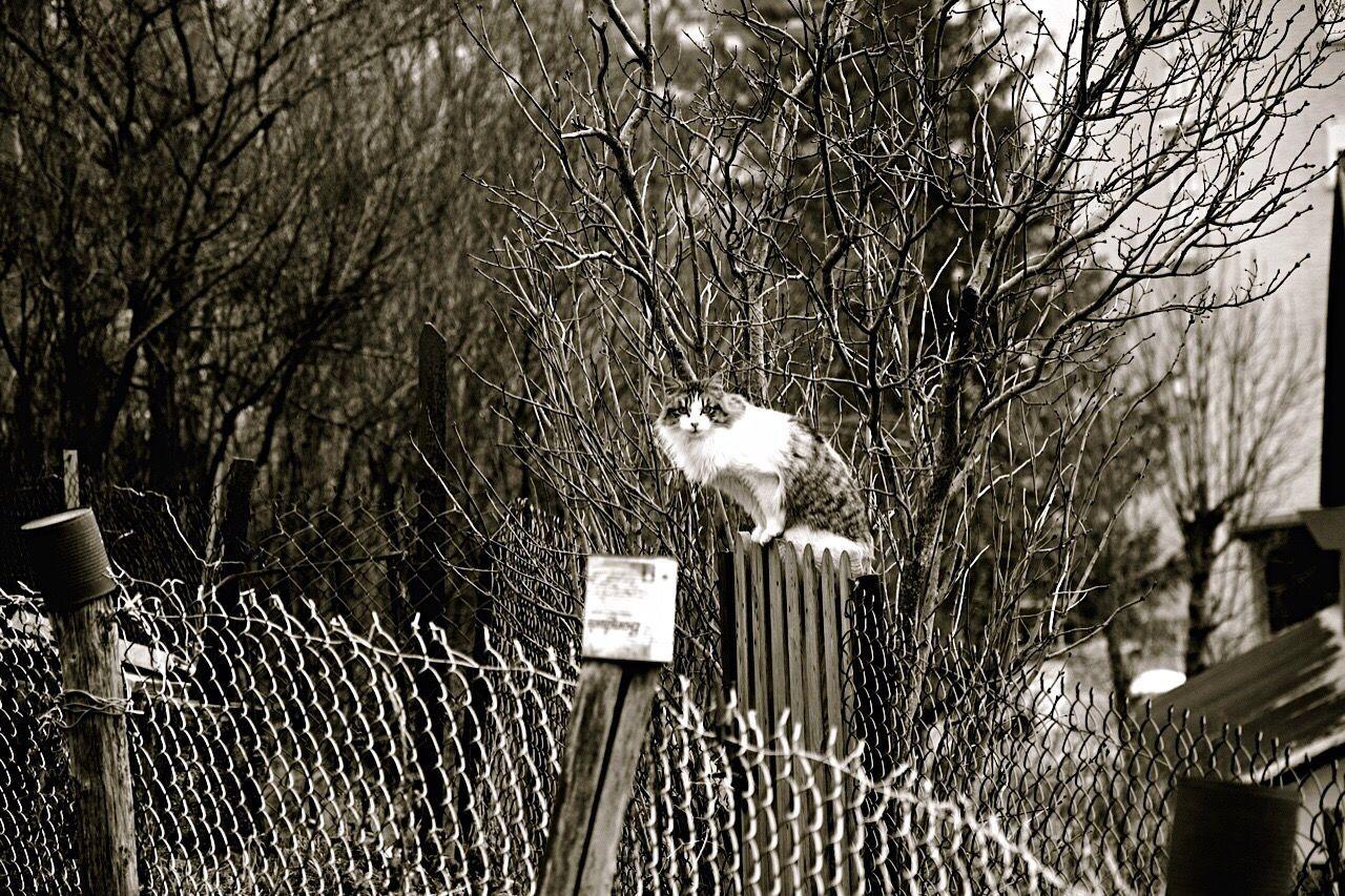 Cat Fortheloveofblackandwhite Blackandwhitephotography Black And White Black & White Blackandwhite Blackandwhite Photography From My Point Of View Black&white Shades Of Grey