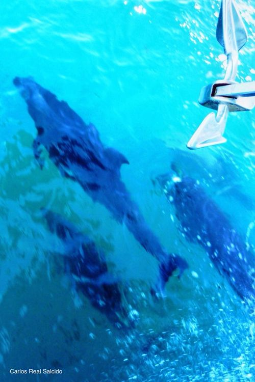 Colour Of Life Blue Sea Life Dolphins Baja California Sur Trips To Never Forget Trip Animals In The Wild Anchor Yachtlife Sea Mammal