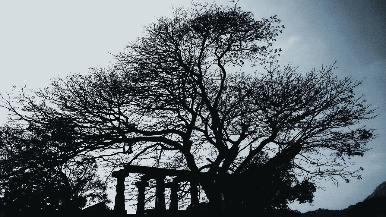 Black And White Photography India Died Tree Monuments Historical Place Nandihills