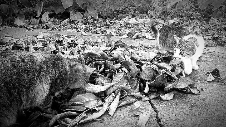 The Hunting Cat Hunting Cathunter First Eyeem Photo