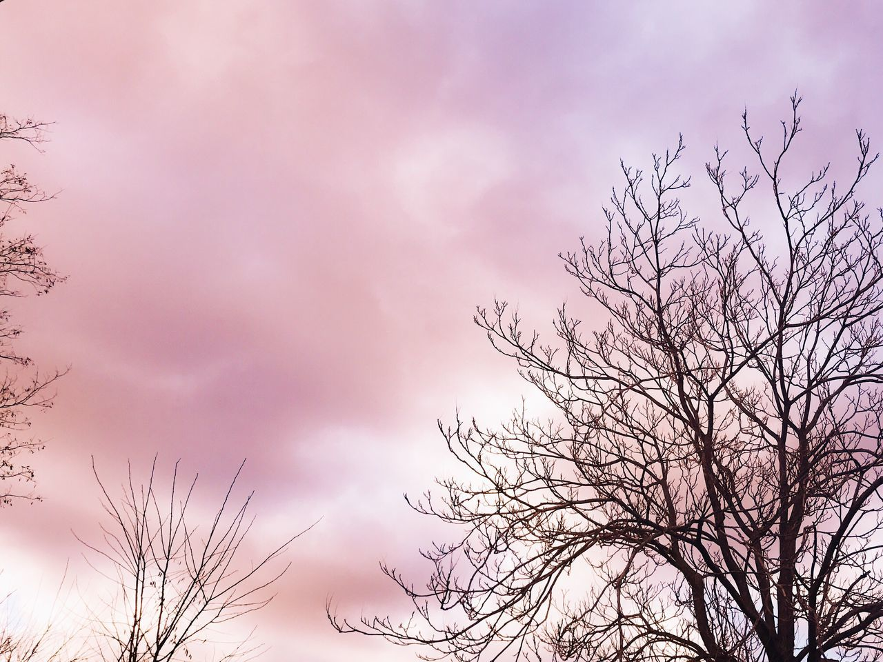 Sky Tree Nature Cloud - Sky Low Angle View Beauty In Nature No People Tranquility Outdoors Growth Branch Bare Tree Scenics Day Treetop Close-up