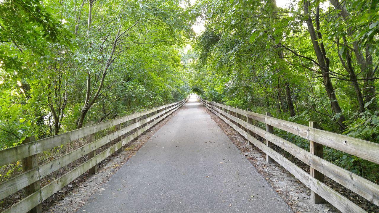 Paths Forest Bike Trails Bridge Fence