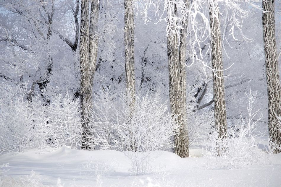 Backgrounds Close-up Cold Temperature Cottonwood Trees Day Full Frame Hoar Frost Indoors  Nature No People Textured  Water Winter Winter Wonderland