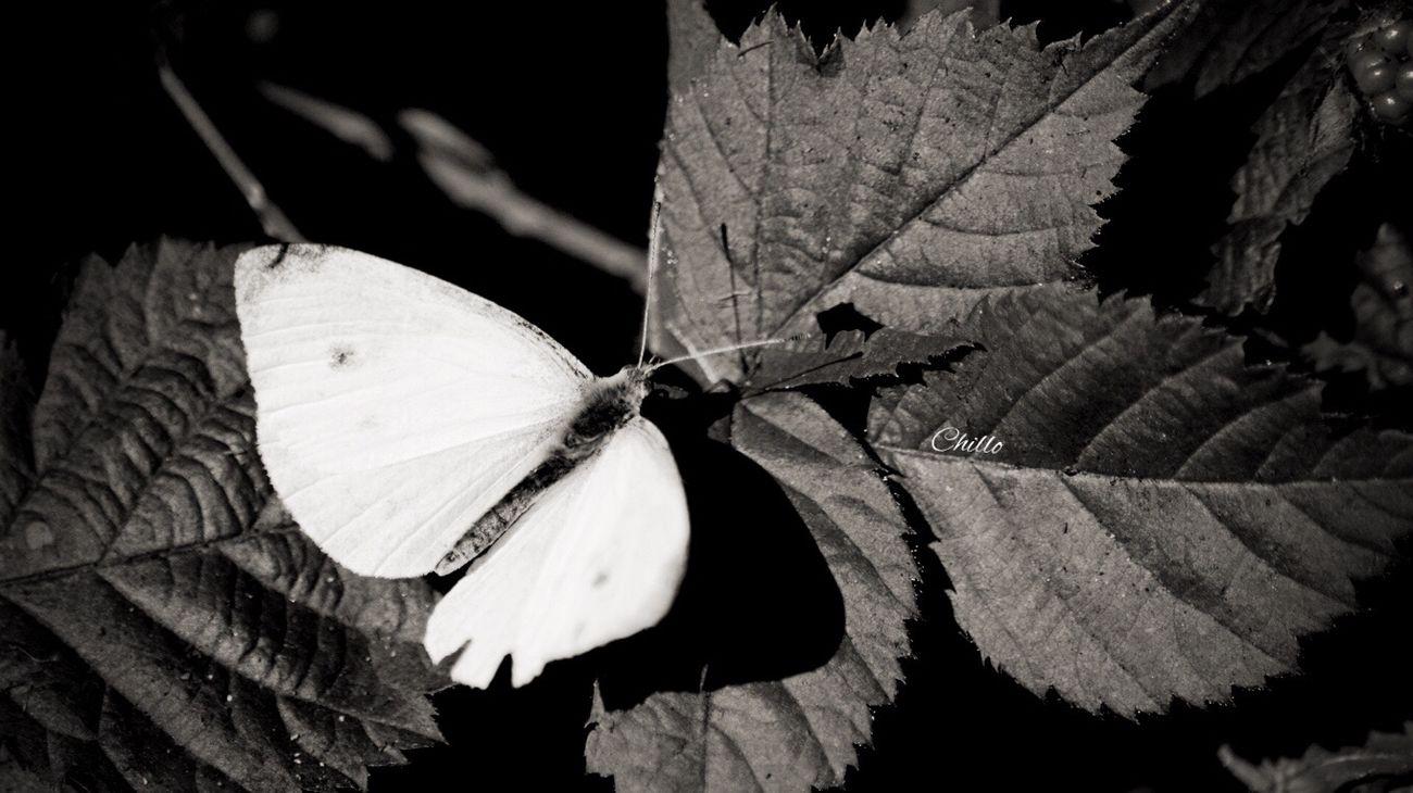 Blackandwhite Monochrome Blackandwhite Photography Noir Darkness And Light Photography Eye4photography  EyeEm Nature Lover Streetphotography Sony A6000
