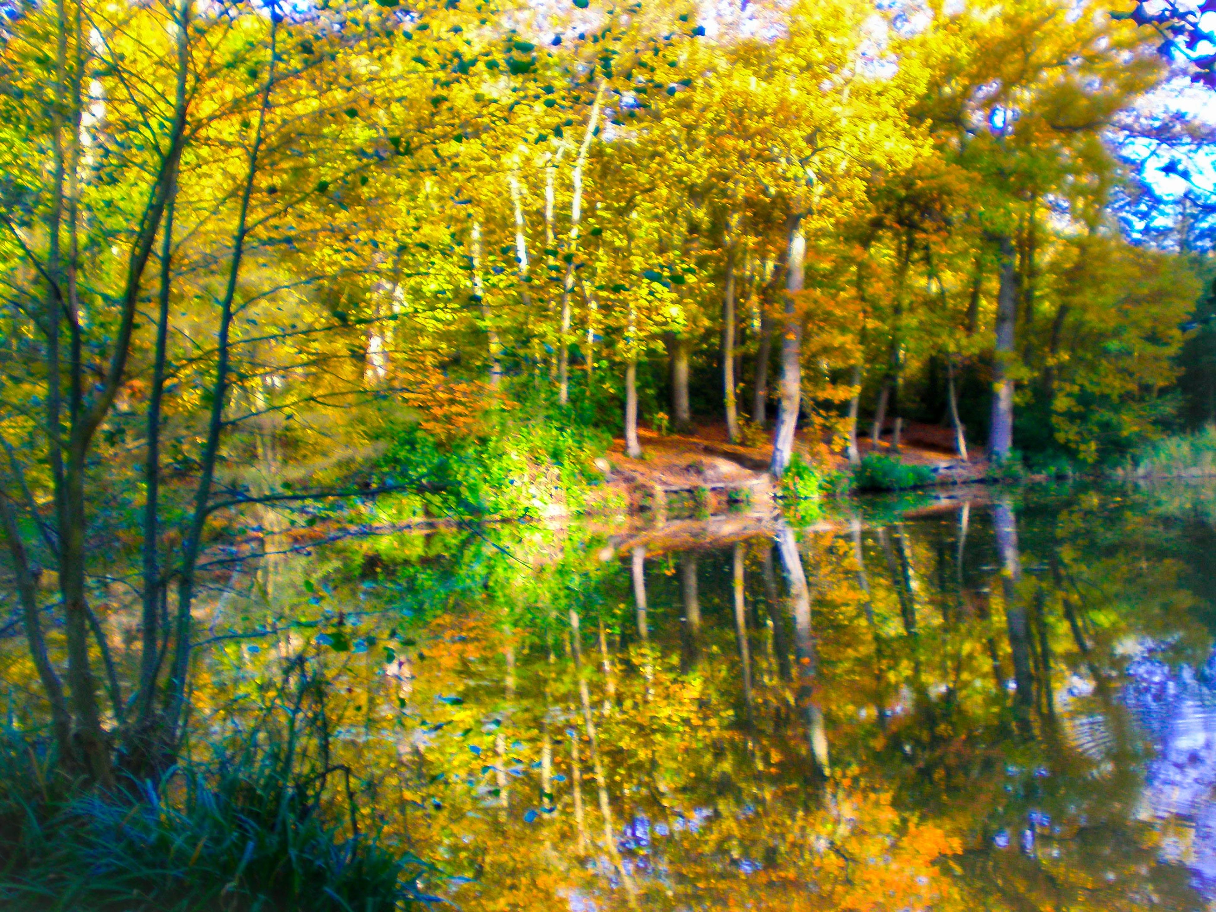 tree, water, tranquility, tranquil scene, nature, beauty in nature, forest, growth, lake, scenics, reflection, green color, branch, idyllic, non-urban scene, day, nautical vessel, outdoors, boat, autumn