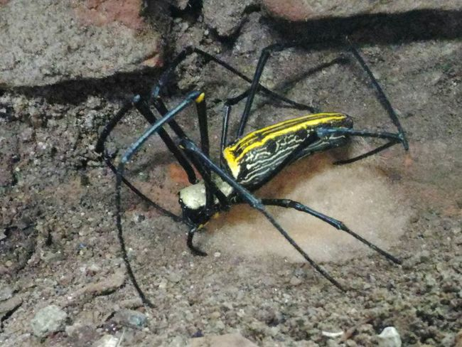 Spidermother Spider Suman Ss India Nature Pragnentspider Showing Imperfection Telling Stories Differently