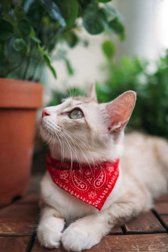 Animal Themes Cat Close-up Day Domestic Animals Domestic Cat Feline Focus On Foreground Indoors  Mammal Nature No People One Animal Pets Plant Potted Plant Sitting Whisker