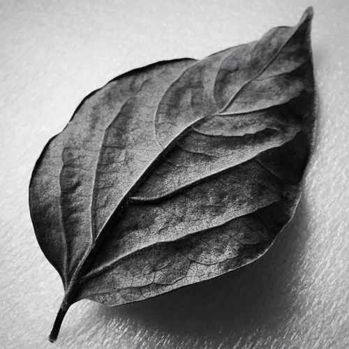 Fallen leaf Dried Leaf Entropy Decayed Beauty Textured  Textures And Surfaces Monochrome Black & White Leaf Dry Close-up No People Autumn Day Nature Fragility Beauty In Nature