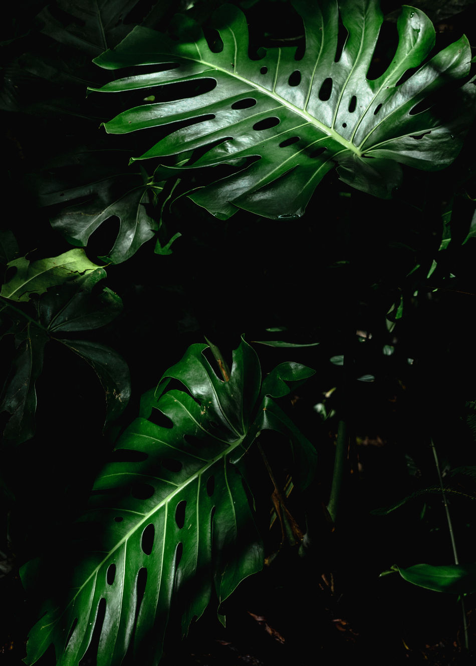 Abstract Photography Backgrounds Beauty In Nature Black Background Close-up Composition Constrast Fineartphotography Freshness Full Frame Green Color Growth Leaf Leaves Light And Shadow Nature Nature_collection Night No People Outdoors Plant Tree Xilitla
