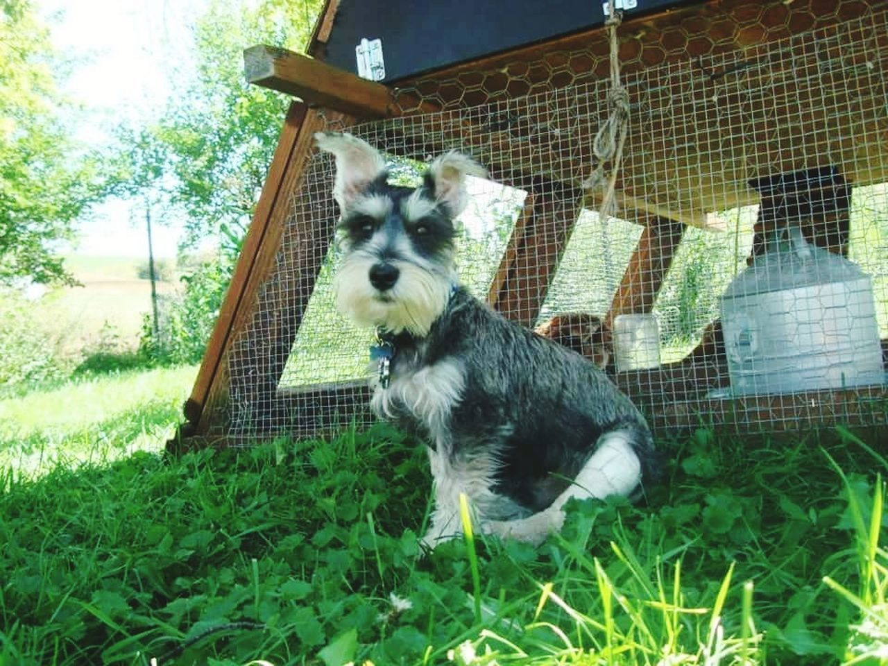Pup on the farm Animal Themes One Animal Outdoors Green Color Nature Field Pets Cage Day No People