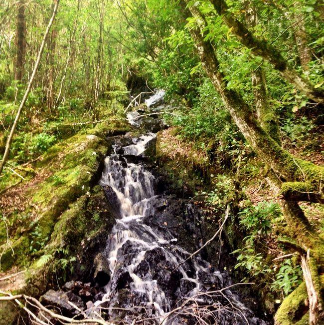 Escaping Talking Trees Eye Em Nature Lover EyeEm Best Shots