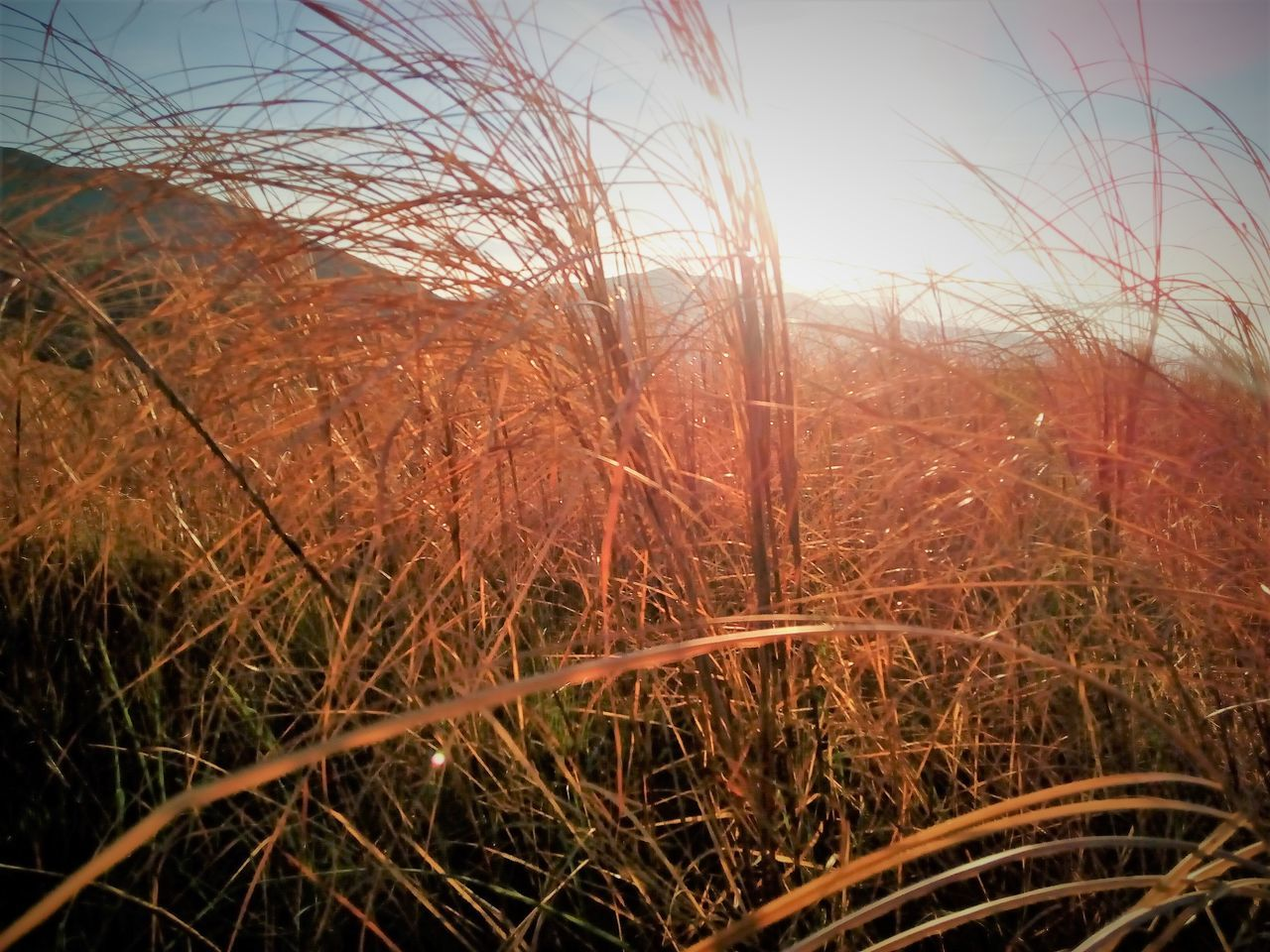 grass, no people, outdoors, nature, growth, tranquil scene, tranquility, day, plant, beauty in nature, scenics, tree, sky, close-up