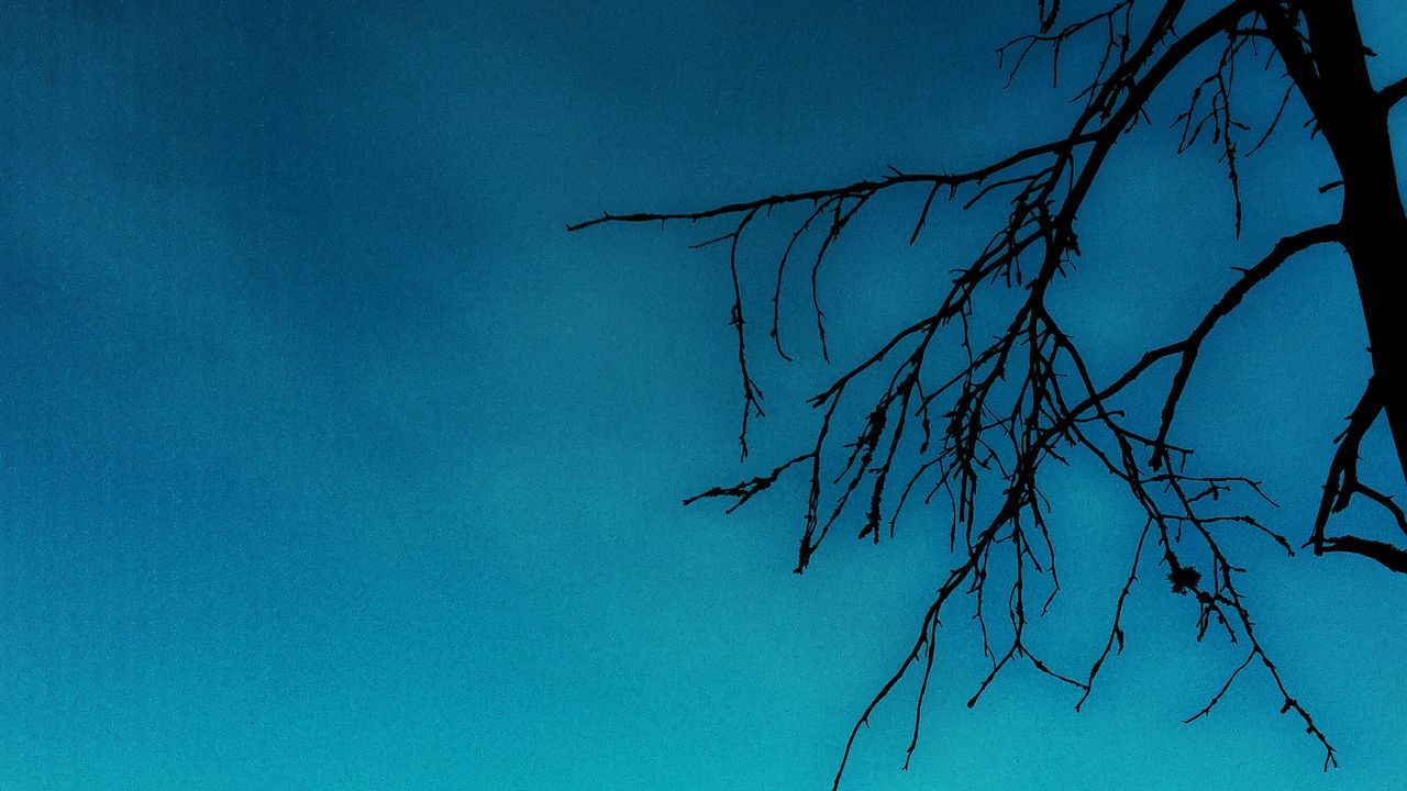 ItsATree Nature Blue Water Winter Cold Temperature Plant Beauty In Nature Tree No People Bare Tree Outdoors Close-up Day Sky LG G4 JaniVauhkonenPhoneography Visual Feast
