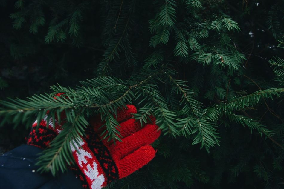 Beautiful stock photos of christmas, Cold Temperature, Cropped, Day, Gloves
