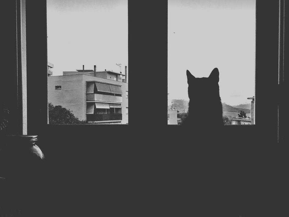 the sentinel EyeEm Best Shots The EyeEm Facebook Cover Challenge IPhoneography Mobilephotography Showcase: November Monochrome Photography Blackandwhite Blackandwhite Photography Pets Silhouette Looking Through Window EyeEm Gallery Cat