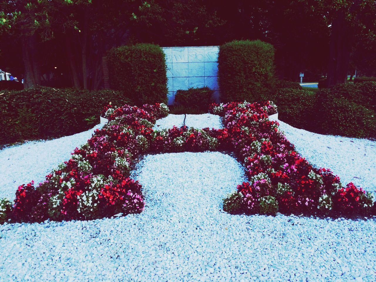 Hampton University University