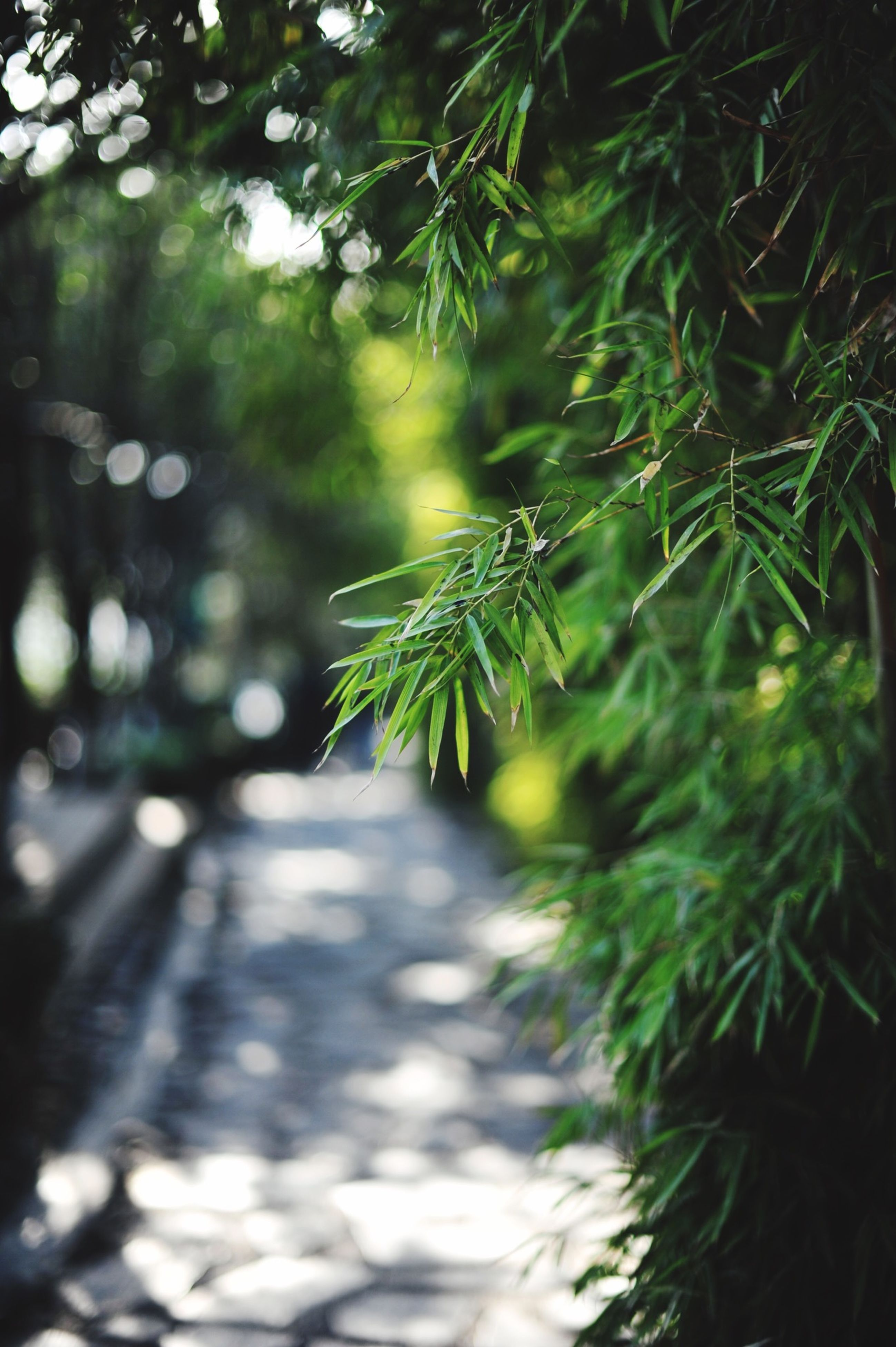 growth, leaf, tree, plant, green color, the way forward, nature, street, wet, road, selective focus, transportation, no people, day, focus on foreground, outdoors, sunlight, close-up, branch, rain