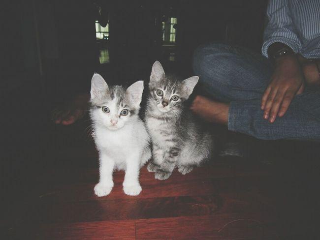 Anyonyonyo Kittens Mew Mew