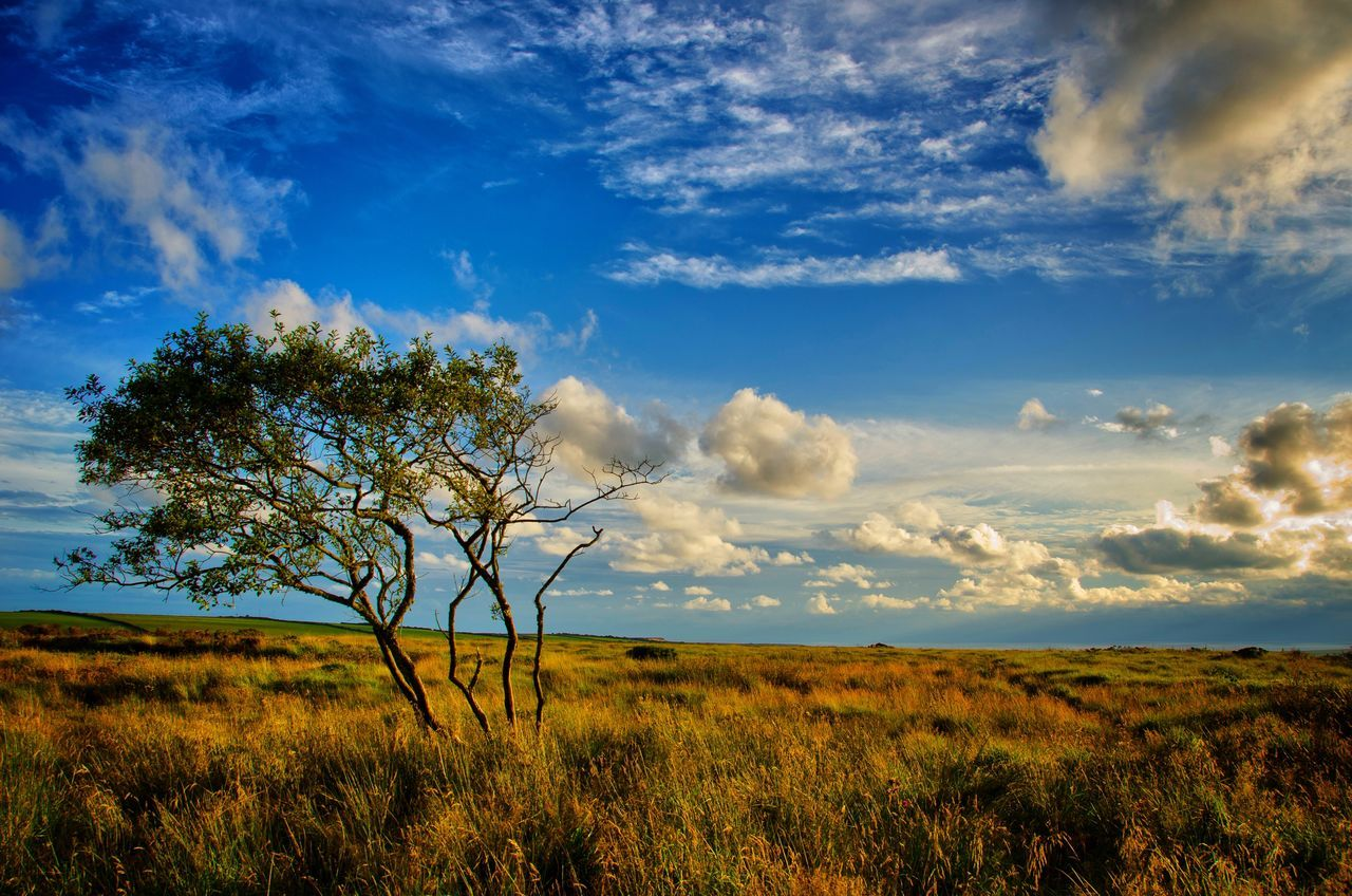 Atmospheric Mood Beauty In Nature Blue Cloud Cloudy Getting Away From It All Getting Inspired Golden Hour Grass Horizon Over Land Landscape Light Majestic Moor  Nature Outdoors Rural Scene Scenics Sky Sunset Tree Windformed 43 Golden Moments