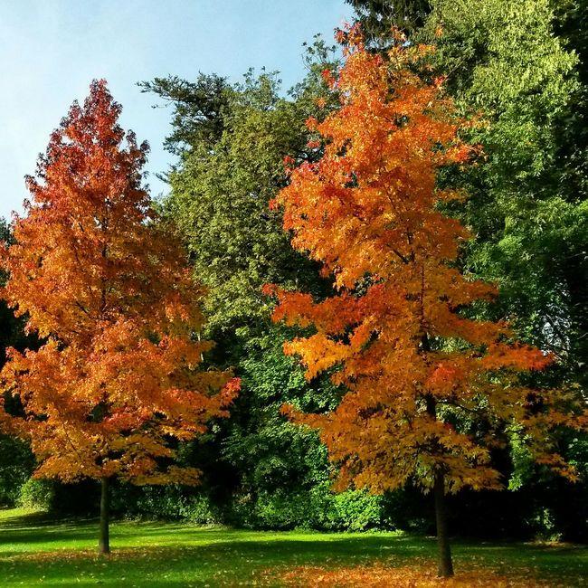 Taking Photos Trees Autumn Autumn Colors EyeEm Gallery Eye4photography  Naturephotography Nature_collection