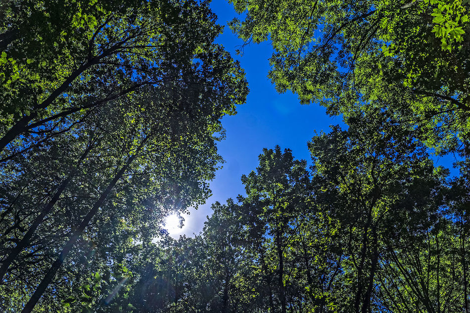 Beauty In Nature Blue BOS Clear Sky Day Green Color Growth HDR High Section Low Angle View Lush Foliage Mittagssonne Nature Nature Non-urban Scene Scenics Sky Sun Sunshine ☀ Tall - High Tranquil Scene Tranquility Tree Canopy  WoodLand Wouden