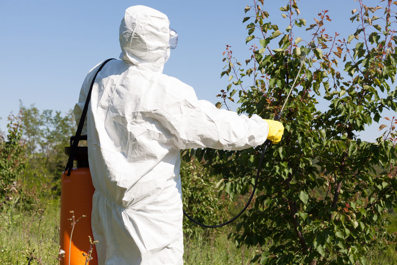 Man spraying toxic pesticides or insecticides in vegetable garden Adult Agriculture Chemical Day Farmer Fetilizer Food Garden Glove Green Health Herbicide Leaf Men Non Organic One Person People Pollution Ptotective Suit Spraying Sprinkling Vegetable