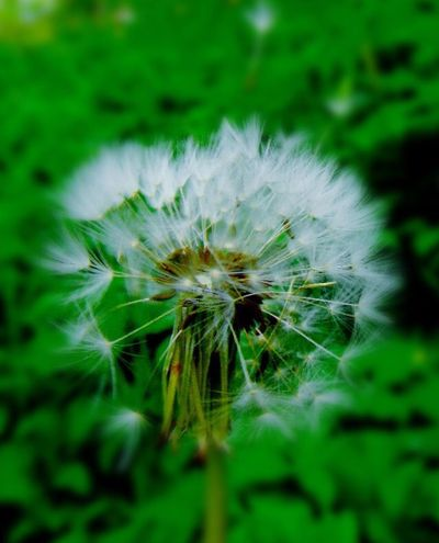 Wildlife & Nature Wildflowers EyeEm Best Shots - Nature Nature Photography Green Taking Photos Walking Around Nature On Your Doorstep Natural Beauty Naturelover Nature_collection Naturelovers Beauty In Nature