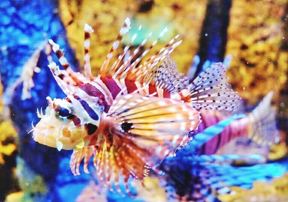 """Nature's Diversities """".. it's a fish,it's a fish.."""" PhonePhotography Beauty In Nature Love Animal Fish WaterCreature"""