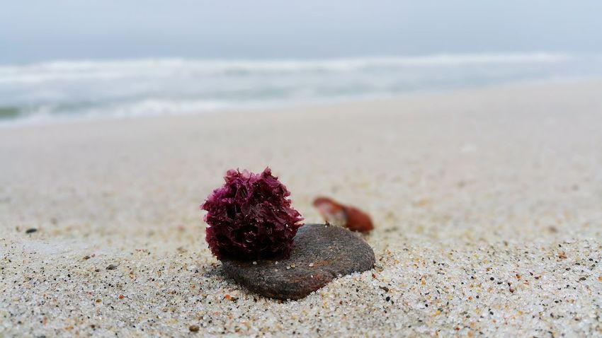 Rock Seaweed Blurred Seasand Seaside Misty Selectivefocus