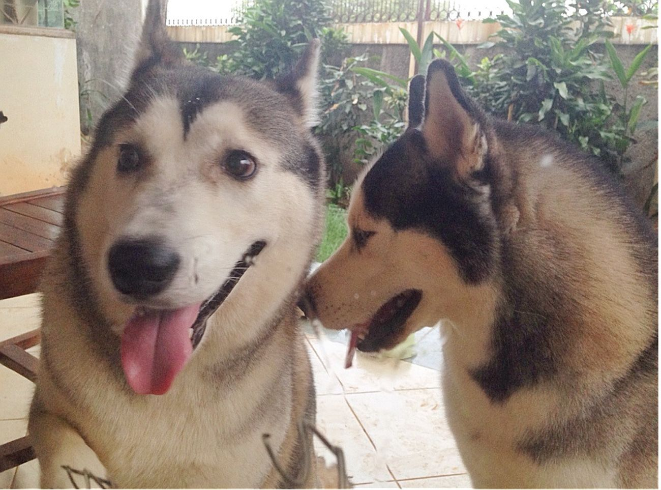 Kazuo & Baileys 😘 The Families By ITag Hobbies By ITag Pets By ITag Animal By ITag