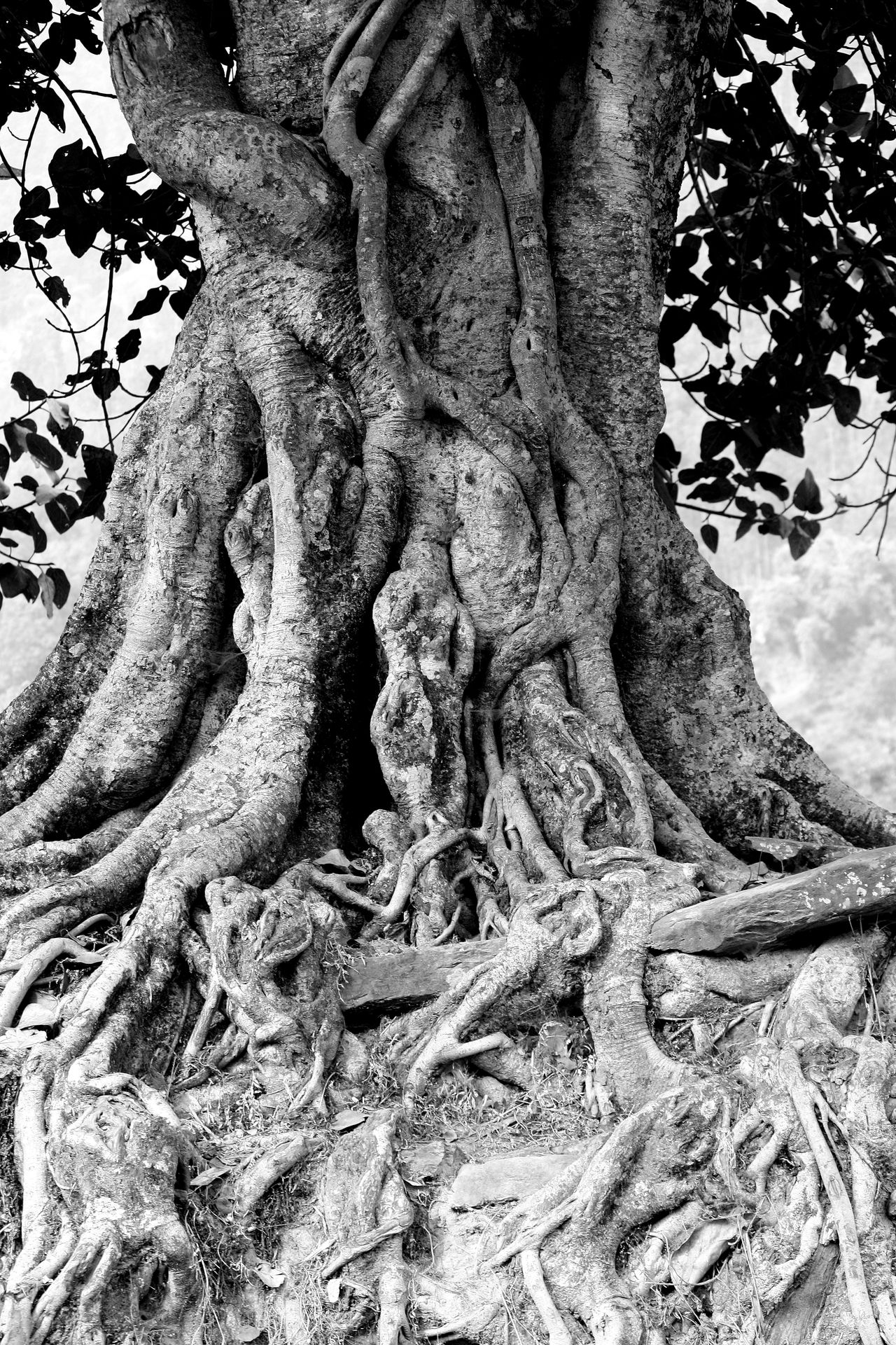Beauty Of Nature Black And White Black And White Photography Black&white Full Frame Natural Pattern Nature's Diversities Nature_collection Roots Roots Of Tree Tree Tree Trunk