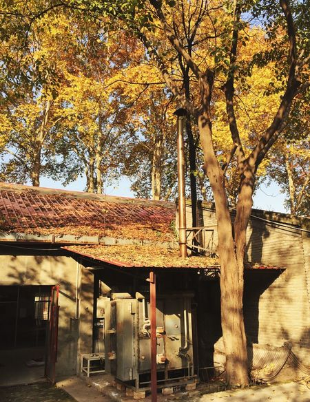 Autumn Autumn🍁🍁🍁 Tree Autumn Tree Trunk Change Outdoors Built Structure Day No People Nature Leaf Branch Architecture Beauty In Nature Freshness Sun University Old Buildings Old House Oldschool High Angle View