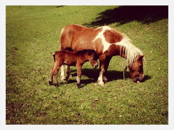 Horse Babyhorse ~Little Thinges make the World Big❤️~