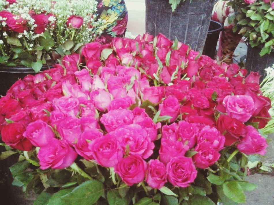 Roses are red. Shoot, Share, Learn - EyeEm Cagayan De Oro Meetup Eyeem Philippines Ailine Filter